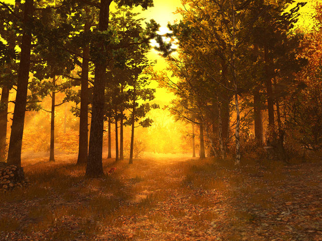 Autumn Forest 3d Screensaver Behold The Golden Sunlight Falling On An Autumn Forest