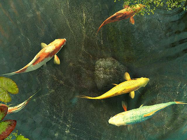 Koi fish 3d screensaver become acquainted with the for Koi pond screensaver